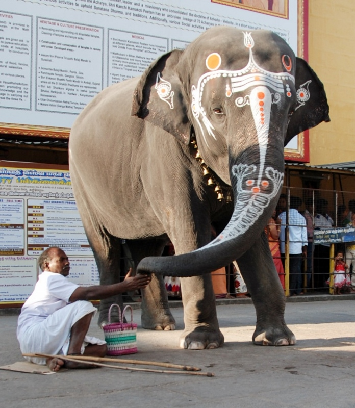 The ubiquitous temple elephant